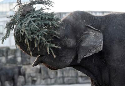 Slon Frosja sa zabáva