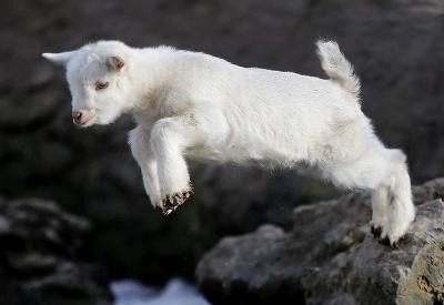 Gigantický kozliatkovský skok