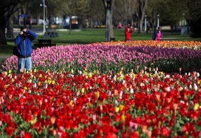 Všade samé tulipány
