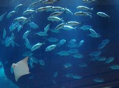 Akvárium v obchodnom centre