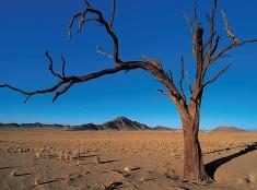 V púšti