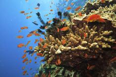 Austrálsky podmorský život