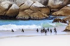 Tučniaky v Afrike