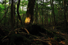 Tajuplný les plný mŕtvol