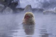 Opice čo sa radi kúpu v termálnych vodách