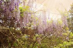 Príroda v plnej kráse
