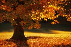 V lone jesennej prírody