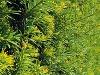 Záhradná poradňa - pýtate