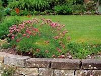 Záhrada vo svahu, ružový