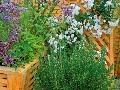 Voňavé rastliny sa dajú