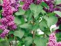 Vzáhrade plnej voňavých rastlín