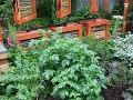 Spoločenstvo zemiakov Aj také plodiny,