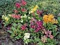 Jarnú farebnosť trvalkového záhona