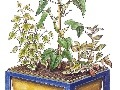 Vysádzaná rastlinná úprava pestovaná
