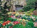 Záhrada plná jarnej pestrosti