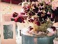 Romanticky pôsobiaca kvitnúca kyslička