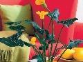 Kvitnúce kornútovky v spojení