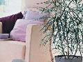 Nebezpečnou izbovou rastlinou v