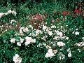 Pri skladbe kvetinového záhona
