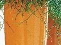 Sukulenty s plazivým rastom