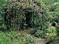Popínavé ruže zdobiace altánok