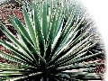 Suchomilné rastliny majú síce