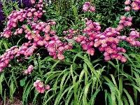 Trvalky kvitnú po celý