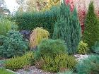 Pri plánovaní záhrady treba