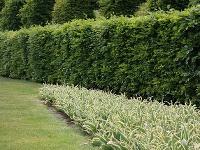 Ako si do záhrady vybrať tie najkrajšie dreviny