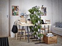 Akými rastlinami dotvoriť pracovňu, aby sme sa v nej cítili príjemne?