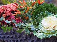 Čo so záhradou počas októbra? My vieme, na aké úlohy by ste nemali zabudnúť!
