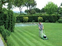 Pestovanie a údržba trávnika