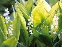 Viete, ktoré rastliny v záhrade môžu byť nebezpečné pre vaše deti?