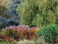 Poupratujte si záhradu