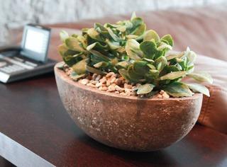 Interiérovým rastlinám sa opäť