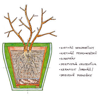 Presádzanie rastlín do kvetináčov