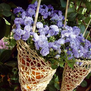 Kvety na povrázku