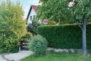 Pôsobenie vegetácie v priestore