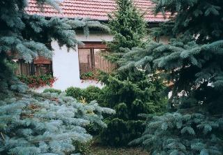 Dreviny v záhrade (1.