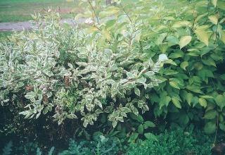 Dreviny v záhrade (2.
