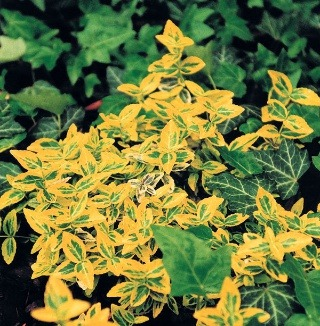 Pôdopokryvné rastliny: – riešenie