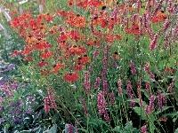 Záhrada pre začiatočníkov, alebo
