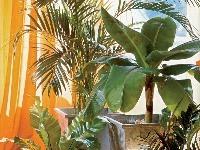 Schránky na rastliny