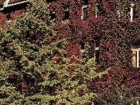 Domy pod rúškom zelene