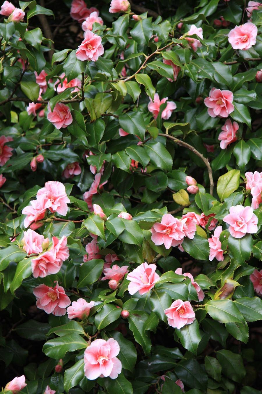 Tipy na ZIMU pre záhradkárov – galéria Mojdom sk 0e3caa7e774