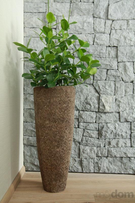 Pri realizácii súkromného apartmánu boli použité tieto rastliny