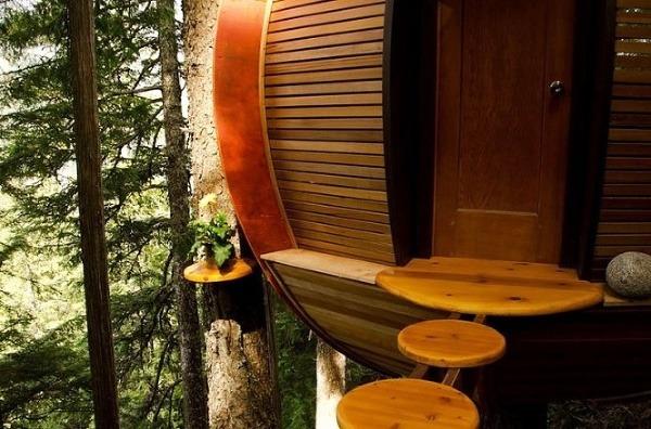 drevo, strom, Kanada, vajce