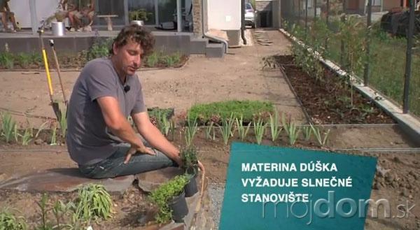 VIDEO: Náhrada trávnika