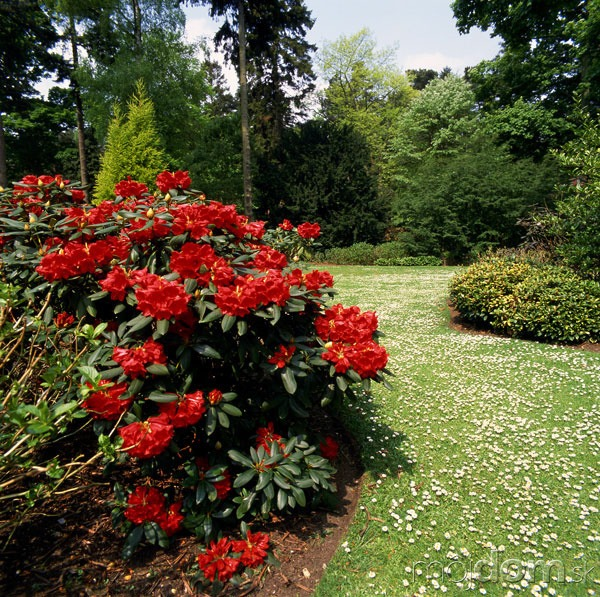 Moderné záhrady si žiadajú
