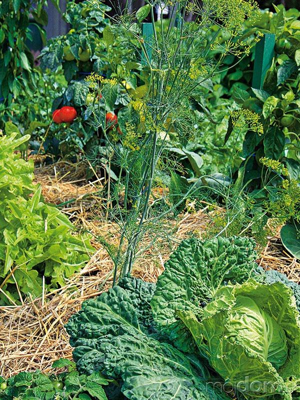 Dôležitou činnosťou vekologickej záhrade